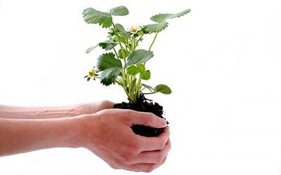 Have you got Green Fingers?